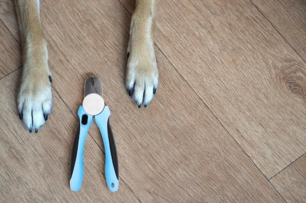Barxbuddy grooming kit reviews.jpeg